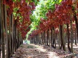 תיירות יין