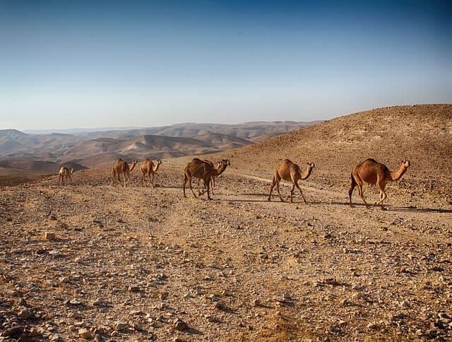 יום כיף לקבוצות במדבר יהודה